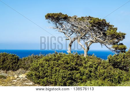 Trees and bushes on the Sunny sea coast on a hot summer day