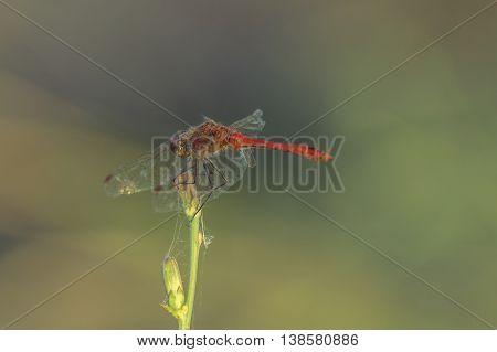 Dragon fly. Dragon fly sit on a stick.