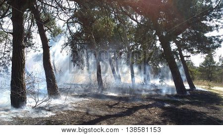 Forest fire in a dry forest. Start a forest fire