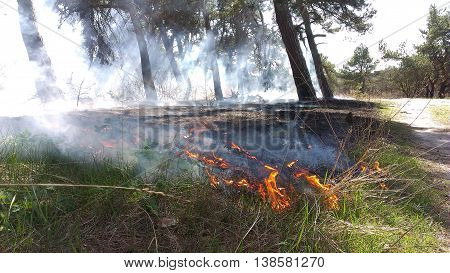 Forest fires in the dry wind completely destroy the forest