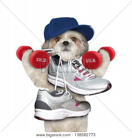 Dog with dumbbells playing sports -- running and jogging -- isolated on white