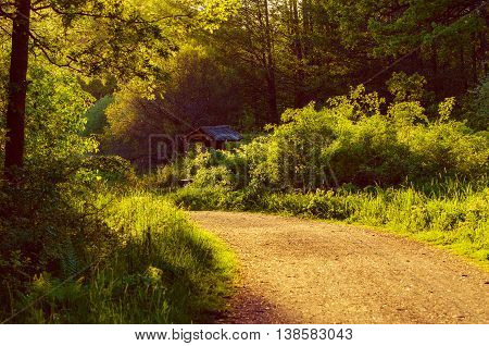 Enchanted fairy forest with summer green trees and walking road, sunny natural rural landscape