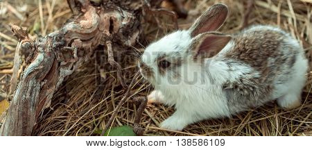 Cute Rabbit And Exposed Roots