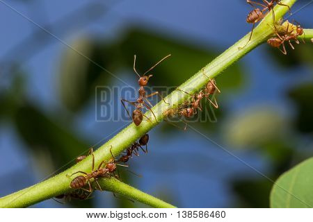 The Working Ants
