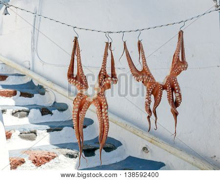 Drying octopus on the clothesline outside. Santorini. Oia.