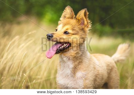 dog stands on wood in high grass