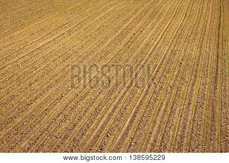 Agricultural layer view od plowed field with young crop