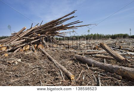 Timber that has been piled up in a clearing in Canada
