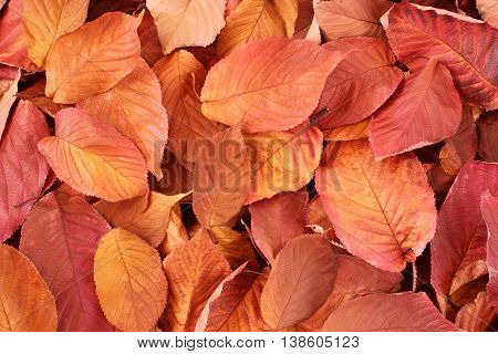 Autumn background - dried orange, yellow, brown leaves