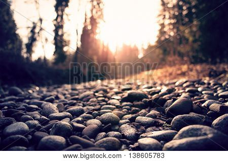 River pebbles against the setting sun in the forest