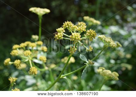 Multiple yellow pointy flowers on a summer day