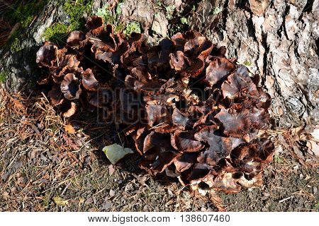 A collection of fungi growing at the side of a tree