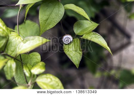 Small white shell snail on a green leaf