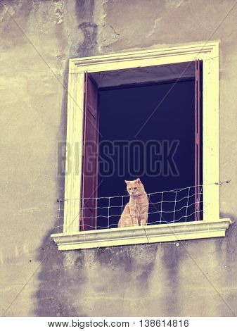 A CAT FACING THE STREET IN AN OLD WINDOW