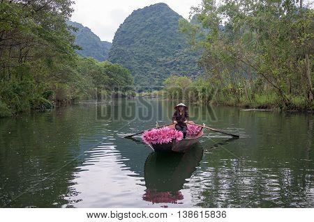 HA NOI, VIET NAM, January 14, 2016 maiden Ha Noi, boating, picking lilies in the river, suburbs, Ha Noi, Vietnam