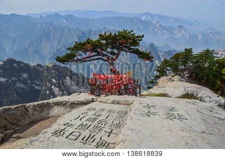Old pine on top of Mount Huashan. In Chinese it is written that it is