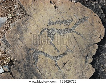 Running animals petroglyphs carved in rocks. Siberian Altai Mountains petroglyphs Russia