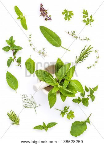 Various Fresh Herbs From The Garden Holy Basil , Basil Flower ,rosemary,oregano, Sage And Thyme ,fen
