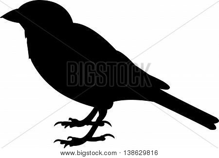 a sparrow black color silhouette vector art work