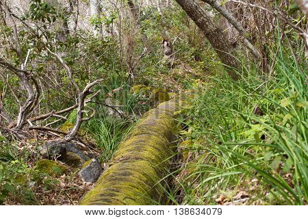 Ancient stone aqueduct in the forest near the town of Los Realejos, Tenerife, Spain