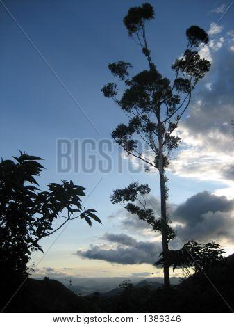 Tree In Sky Background