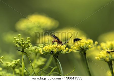 Insect on a yellow flower macro outdoor
