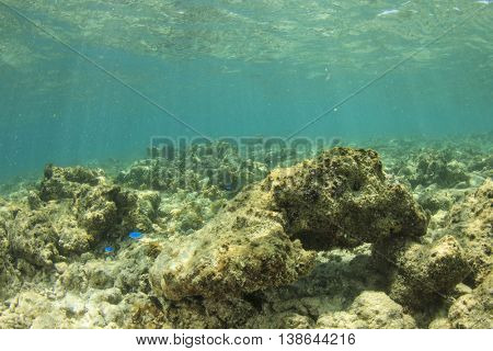 Dead coral environmental damage from overfishing, pollution, global warming and climate change