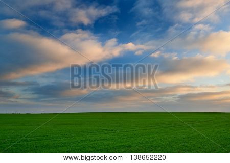 Beautiful sunrise over the green field in Lithuania