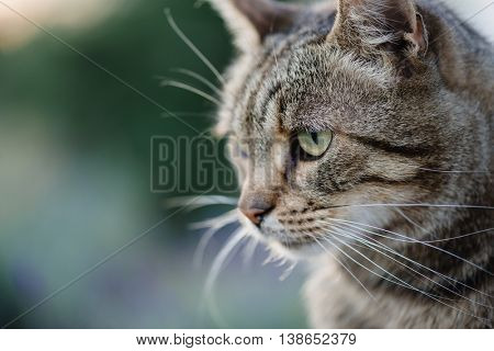 Close up cat portrait. Cute cat posing outdoor.