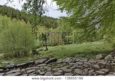 Panorama of glade with and  green  forest, Vitosha mountain, Bulgaria