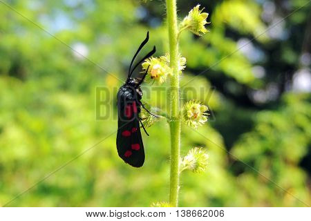 Beetle On Grass