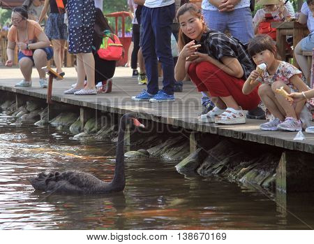 People Are Feeding Swans In Park Of Chengdu, China