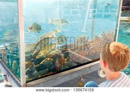 Santorini, Greece - April 28, 2016: Aquarium with fish and lobster on the waterfront of the old harbor in the village of Oia. Santorini.
