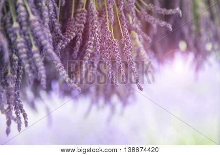 Bunches of fresh lavender hanging to dry in the sunshine. Selective focus and intentional lens flare. Space for your text.