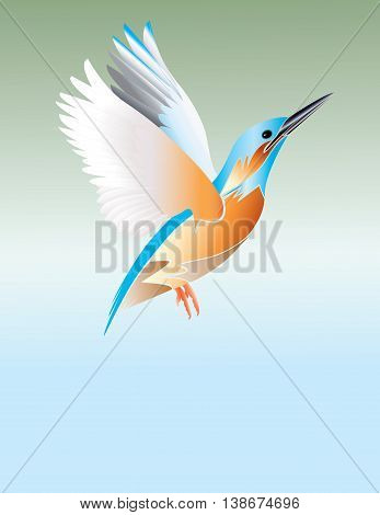 The flying blue kingfisher on blue and green background