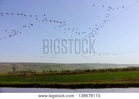 Birds Travel in Agmon Ha Hula park Israel