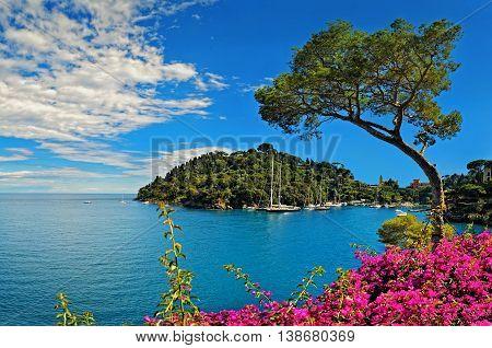 Portofino bay with cedar on Ligurian coast in Italy