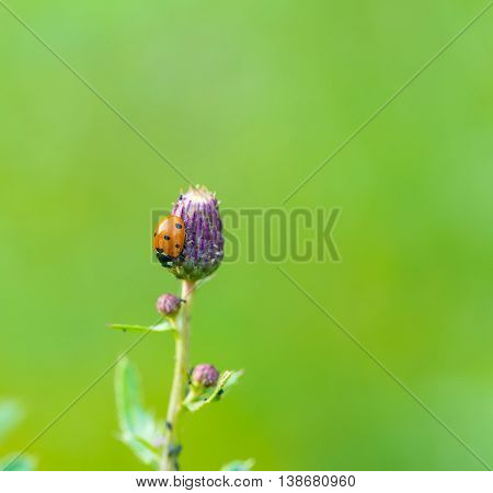 Close Up Of Ladybird Sitting On Plant