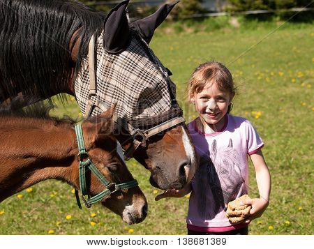 Little girl feeding horses on pasture with bread