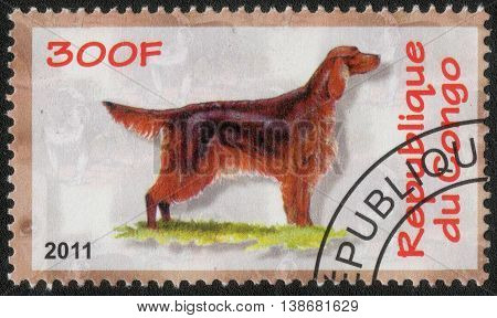CONGO - CIRCA  2011: A post stamp printed in Congo shows a series of images Irish Setter