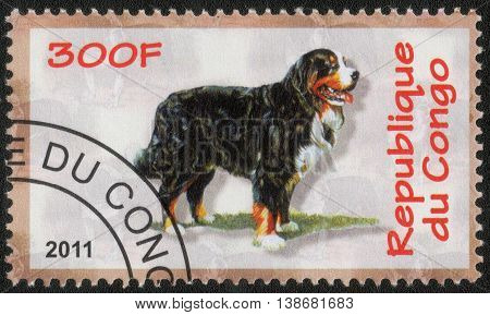 CONGO - CIRCA  2011: A post stamp printed in Congo shows a series of images Bernese Mt. Dog