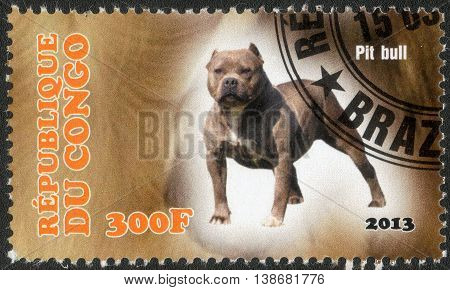 CONGO - CIRCA  2013: A post stamp printed in Congo shows a series of images pit bull