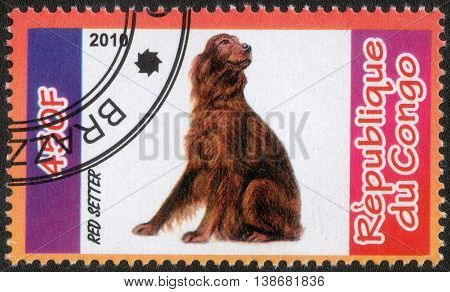 CONGO - CIRCA  2010: A post stamp printed in Congo shows a series of images red setter