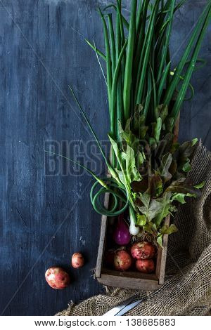 Fresh Vegetables Ingredients For Cooking On Dark Background, Top View, Place  Text
