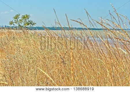 Gently sloping shore of the sea bay is overgrown with wild herbs