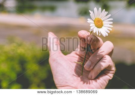 Quit Smoking - Hand holding a flower instead of a cigarette (toned effect)
