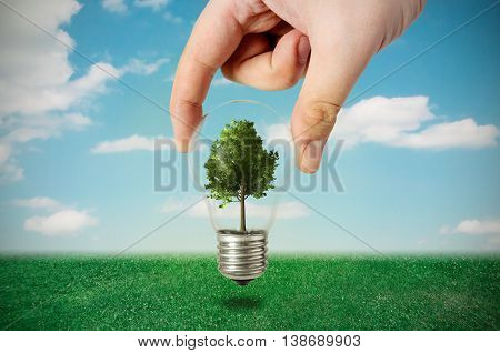 Energy Efficiency Concept. Abstract Composition With Tree In Bulb