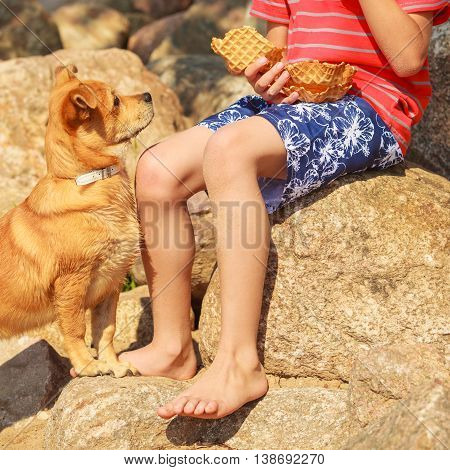 Connection between animals and kids concept. Sportive mixed breed dog and boy kid playing together. Active child with puppy having fun.