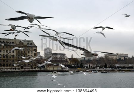 Turkey - Istanbul throat historic Haydarpasa train station and Near the pier with lots of seagulls flying.