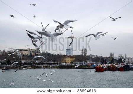 Istanbul Turkey - December 22 2012: Istanbul Kadikoy dancing seagulls on the pier. Seagulls are fed with food provided by people around the harbor.